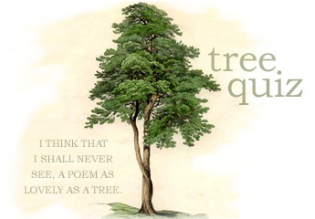 ...I shall never see a poem as lovely as a tree...